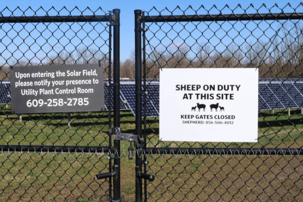 Sheep signs