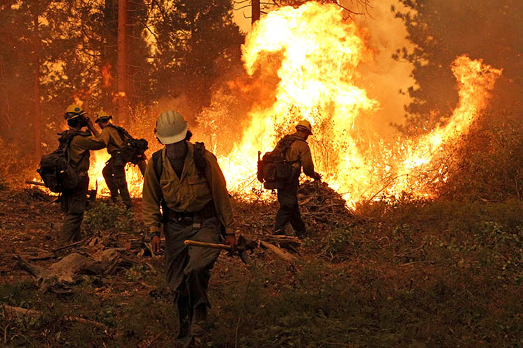 fire crews fight a wildfire