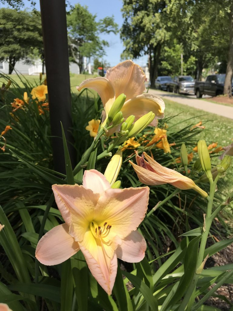 lilies below a lamp post