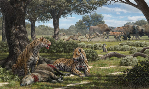 Illustration of La Brea carnivores