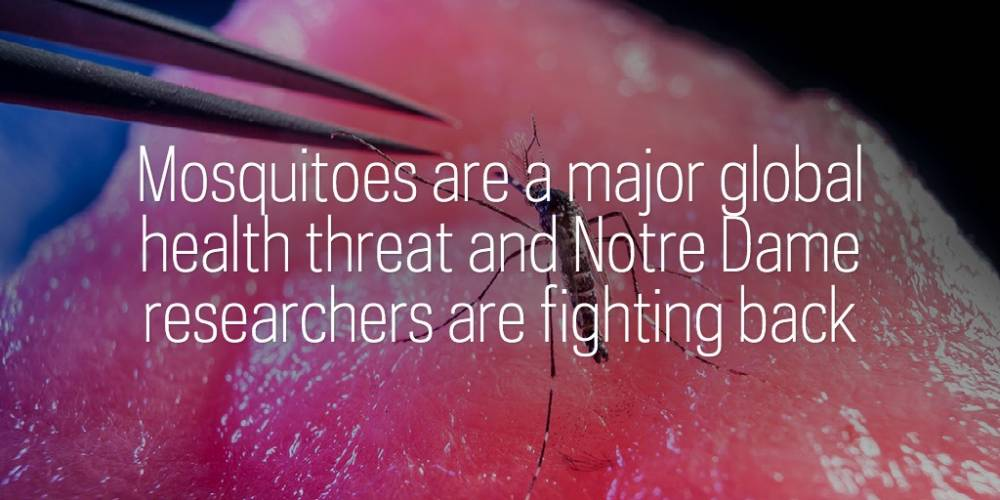 Mosquitoes are a major global health threat and Notre Dame researchers are fighting back