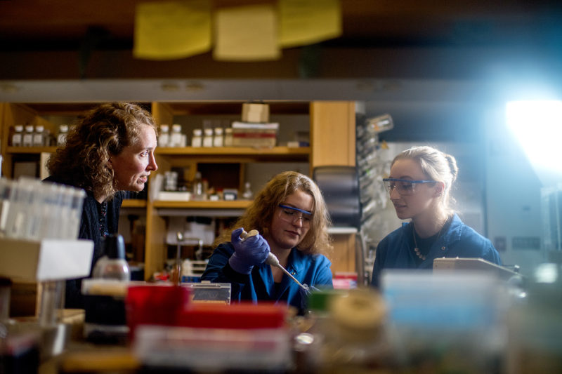 Heather Clark, who will direct the Systems Bioanalysis and Chemical Imaging Institute, works with students Sarah Beatty and Nicole Langlois in 140 The Fenway on Oct. 1, 2018. Photo by Matthew Modoono/Northeastern University