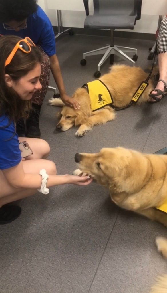 students petting dogs