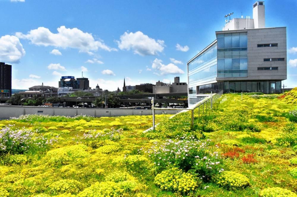 greenery on roof of CoE