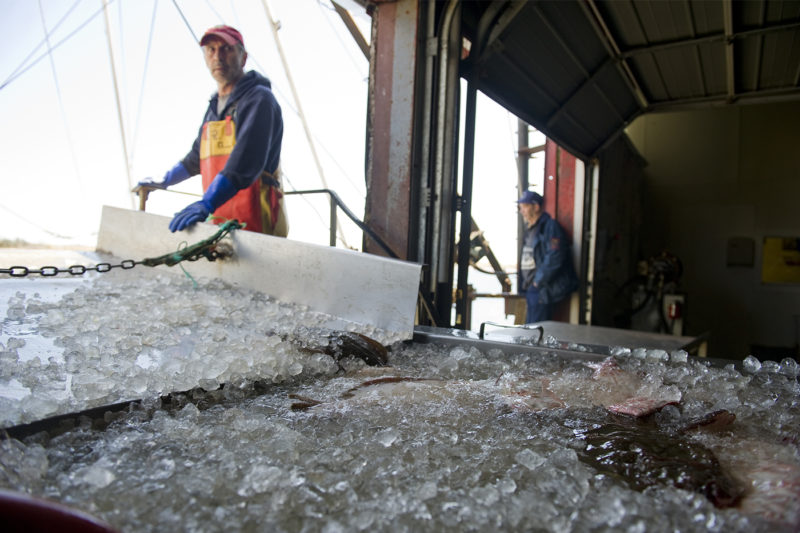 Fish are unloaded from the Destiny fishing boat at the Whaling City Seafood Display Auction on April 28, 2013 in New Bedford, Massachusetts. (AP Photo/The Christian Science Monitor, Ann Hermes)