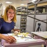 Woman restores glass flower