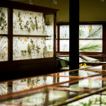 The Harvard Museum of Natural History gallery that houses what is officially the Ware Collection of Blaschka Glass Models of Plants has undergone a top-to-bottom facelift.