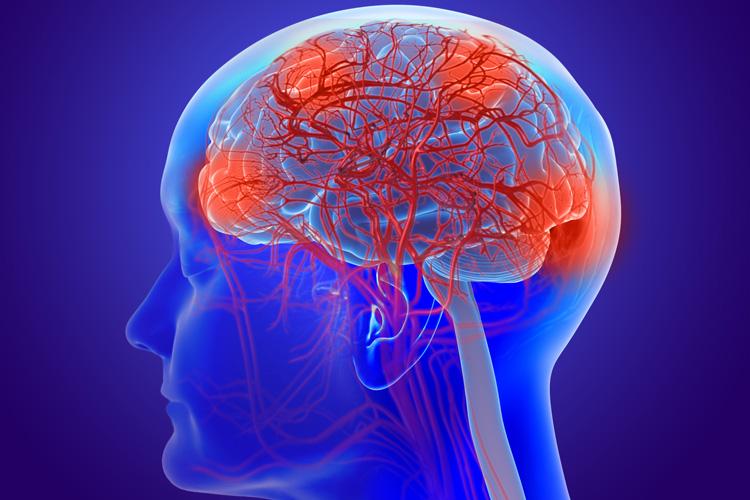 stock photo of brain