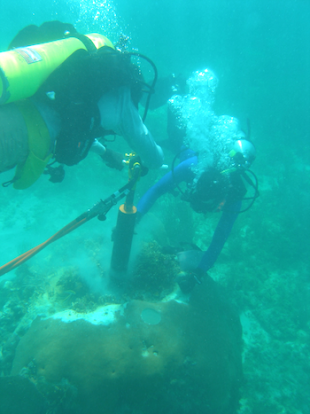 Gulf of Mexico coral reefs may only be saved by a dramatic reduction in greenhouse gas emissions beyond those called for in the Paris Agreement, according to Rice University-led research. Here, members of co-author Kristine DeLong's lab drill into coral reefs to extract samples on Dry Tortugas in the Florida Keys. (Credit: Courtesy of Kristine DeLong, Louisiana State University)