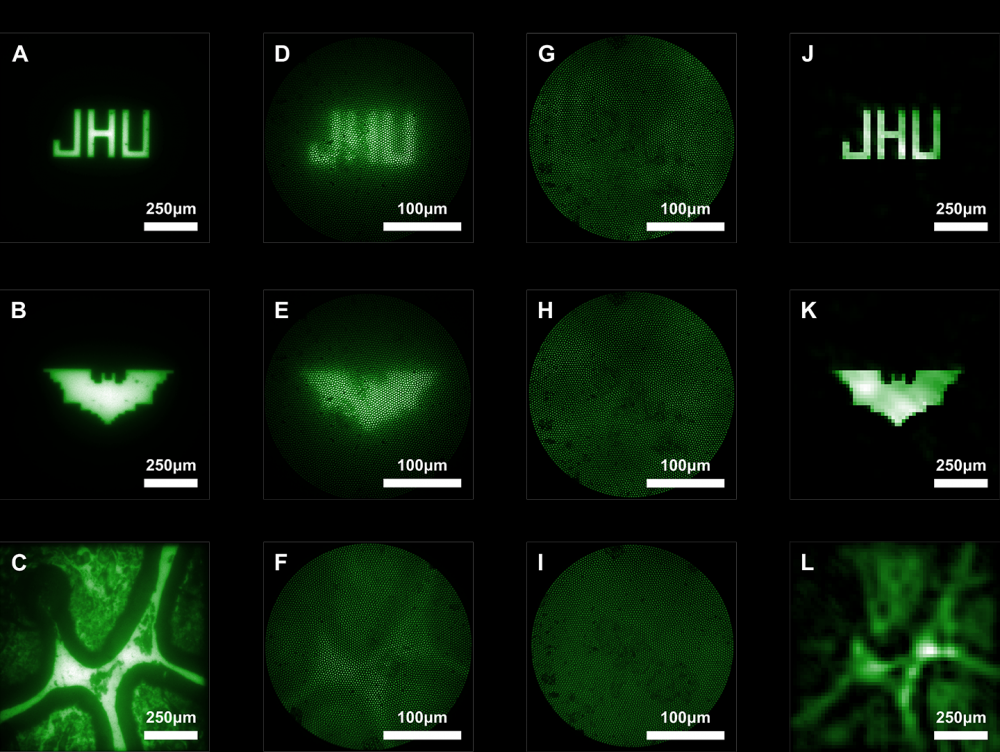Composite shows 12 images captured by microscopes and microendoscopes to compare clarity