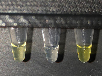 fluoride water test