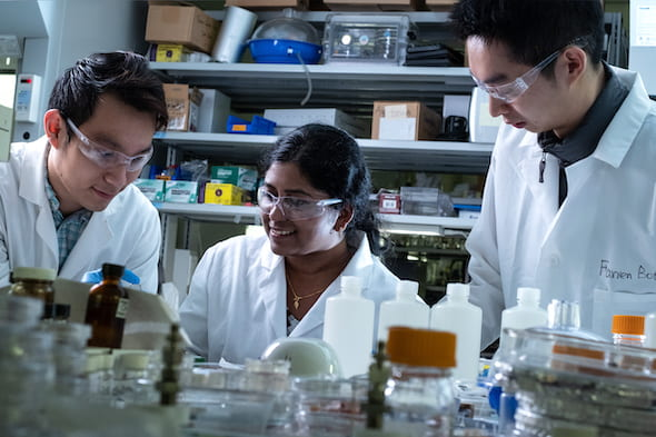 From left, Rice University graduate student Quan Anh Nguyen, postdoctoral fellow Anulekha Haridas and graduate student Botao Farren Song construct full-cell batteries with high-capacity silicon anodes and high-voltage nickel manganese cobalt oxide cathodes coated with protective alumina. (Credit: Jeff Fitlow/Rice University)