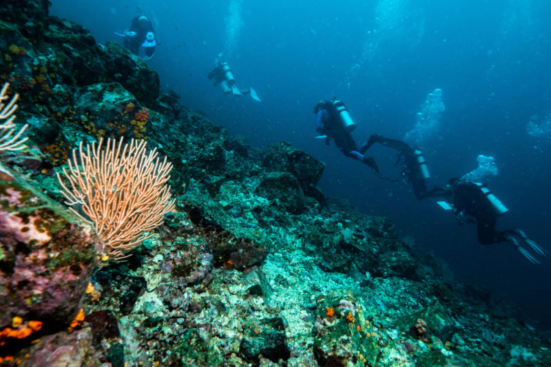 Divers from the Three Seas program explore a rocky reef in Coiba National Park, Panama. Photo by Tim Briggs for Northeastern University