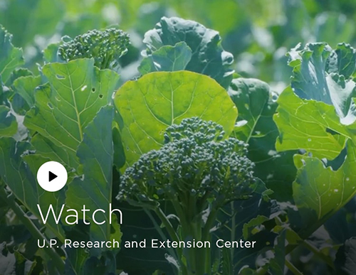 Watch: UP Research and Extension Center