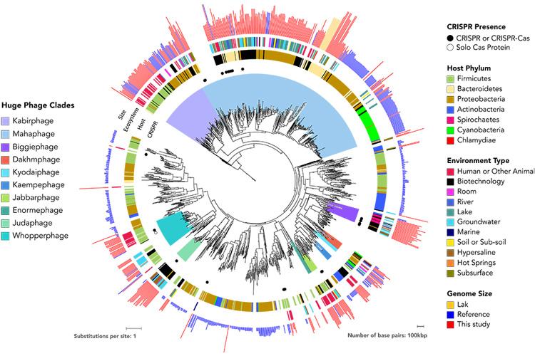 family tree of huge phage
