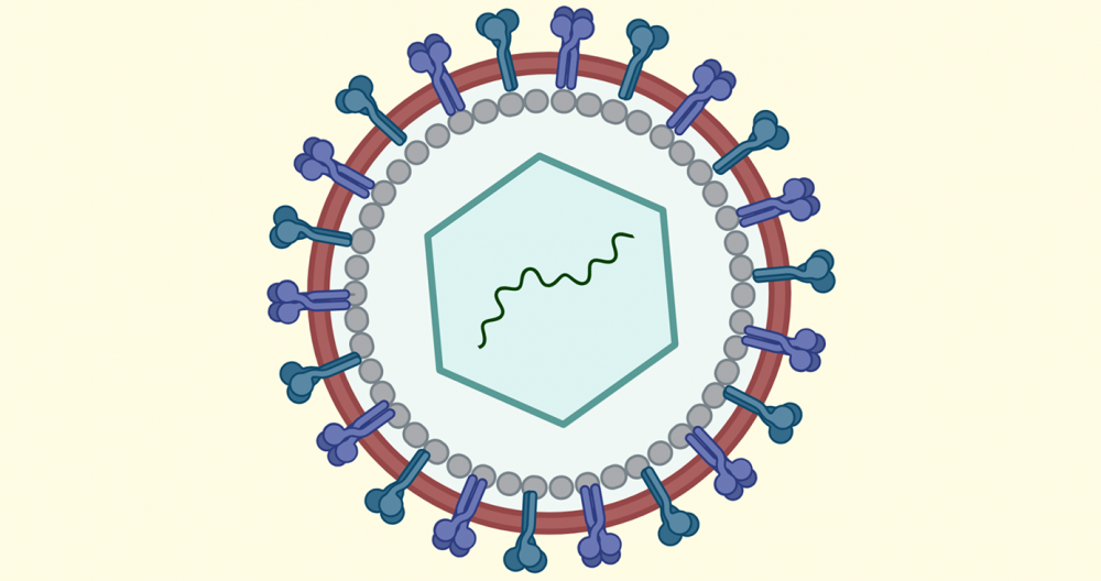 A depiction of the coronavirus in blue, red and white