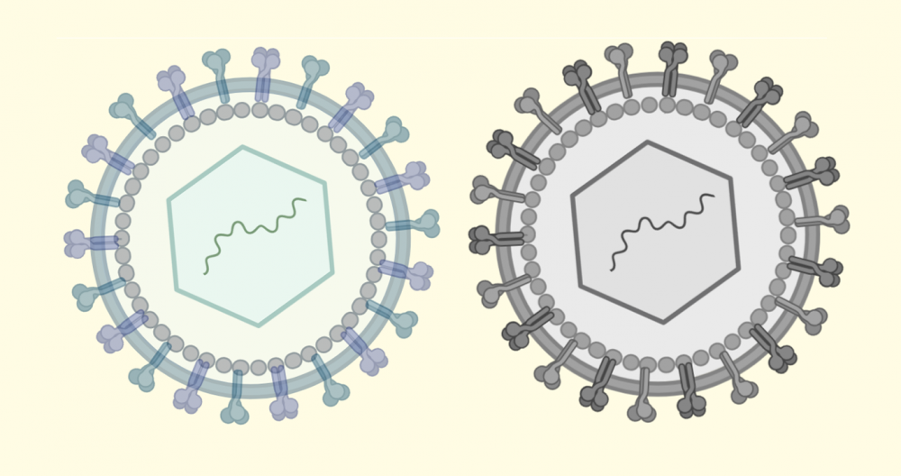 Two viruses set side by side over a pale yellow background