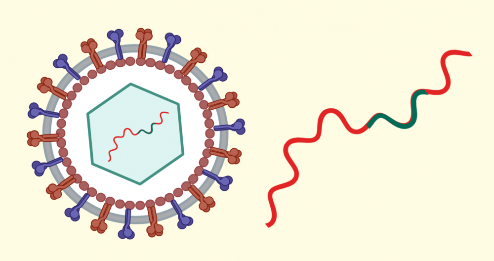 a depiction of a blue and red virus next to a squiggle of red and blue
