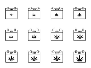 Monthly calendars with cannabis leaves on each page