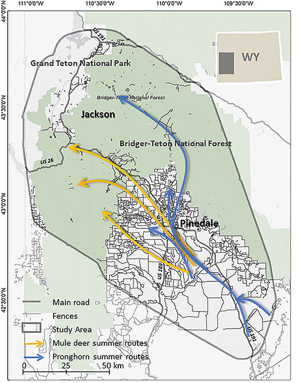 A map of a portion of western Wyoming shows common migratory routes used by mule deer and pronghorn antelope