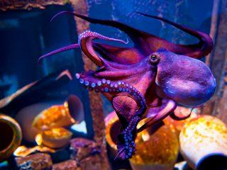 Photo: An octopus